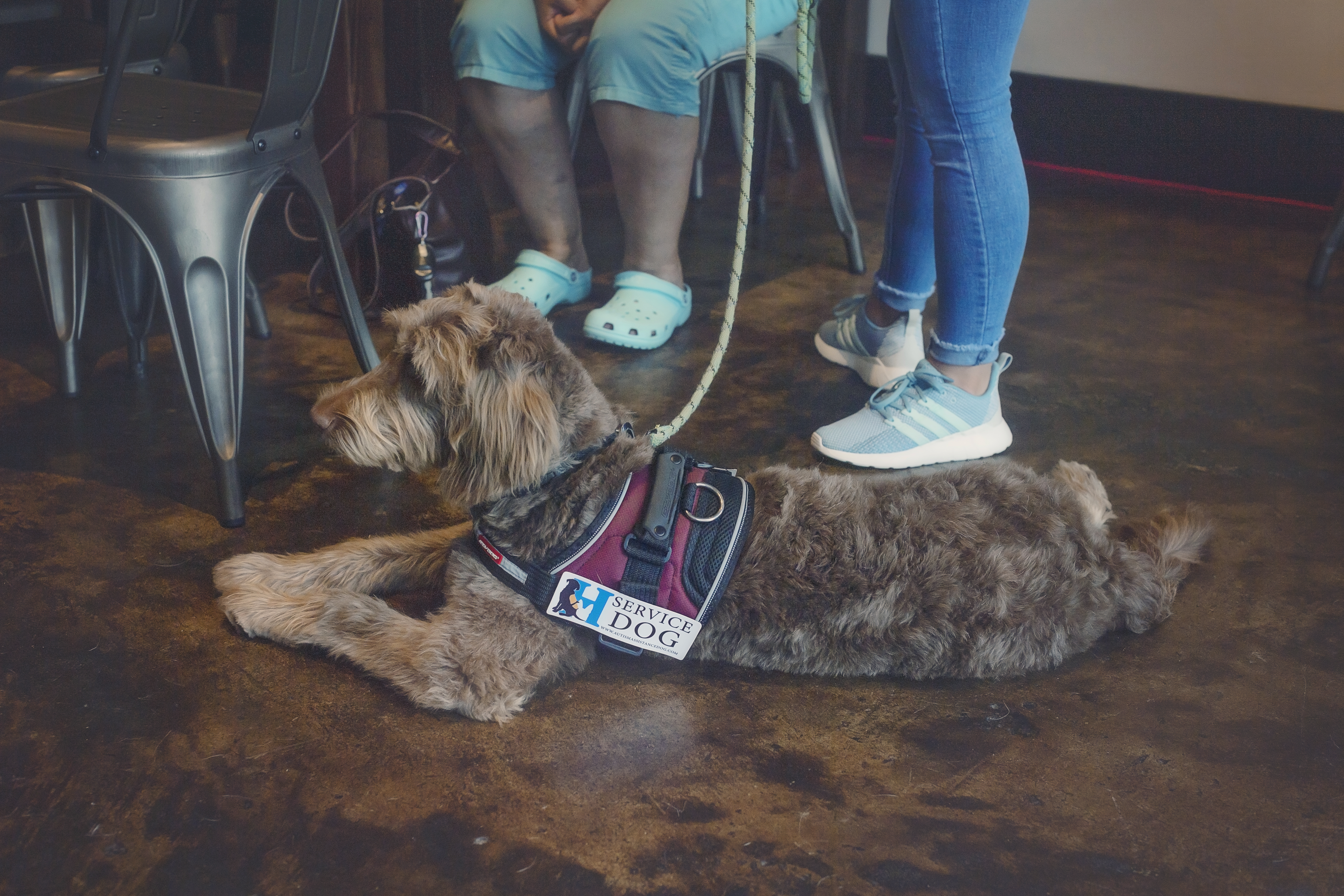 service dog at fundraiser