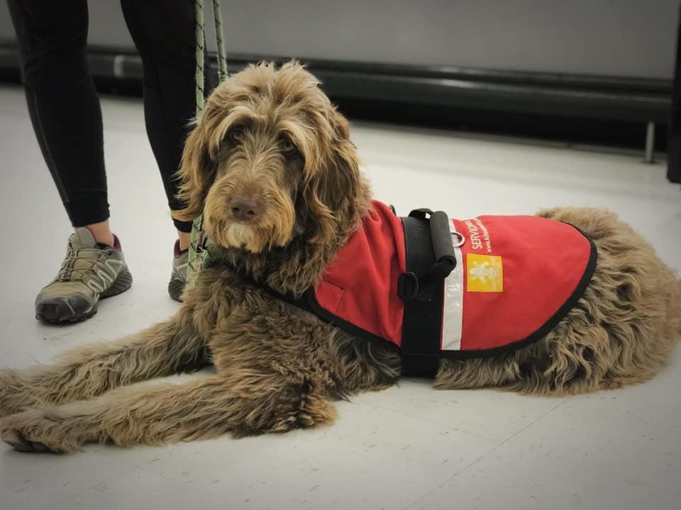 service dog with vest